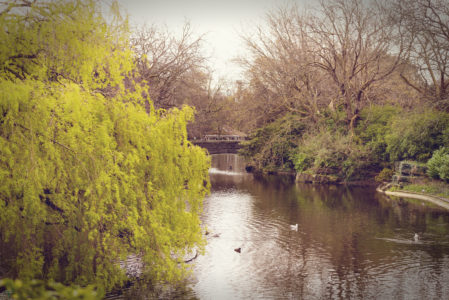 Dublin - Vatinga Photography - Landschaft - 10