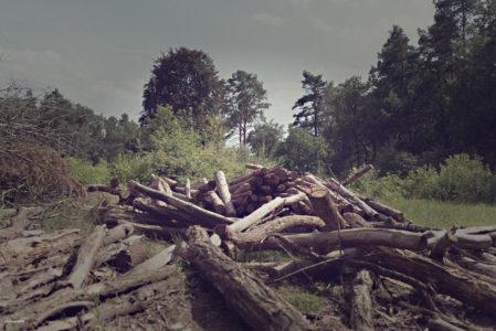 Landschaftsfotos - Beelitz Heilstätten - Vatinga Photography - 7