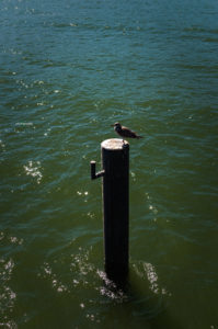 Landschaftsfotos - Stralsund - Vatinga Photography - 8
